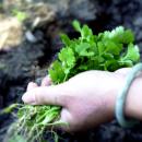 Wie weit reicht die transformative Kraft der urbanen Ernährungsbewegung?
