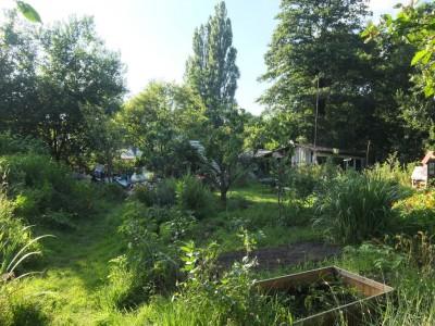 Wurzelwerk_Garten