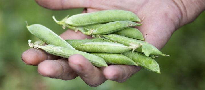 Zu den Vorteilen transformativer Ernährungsinitiativen und -unternehmen